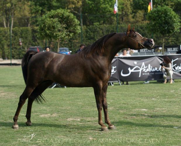Rahba Org Horse Azhman Monisko